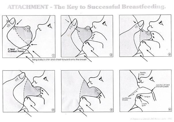 Breastfeeding 101 Proper Latch Unbound Birth